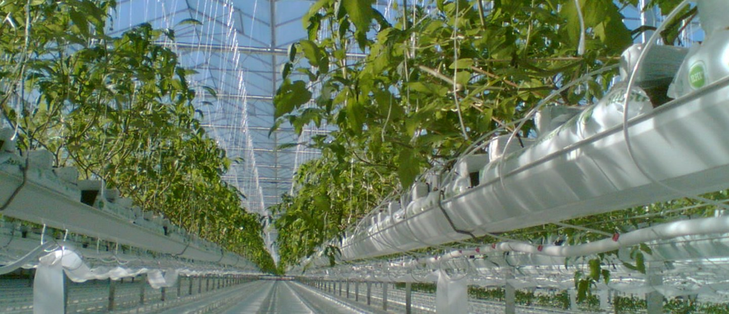 Solutions for protected crops