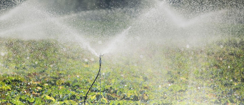 Sprinklers Irrigation Netafim