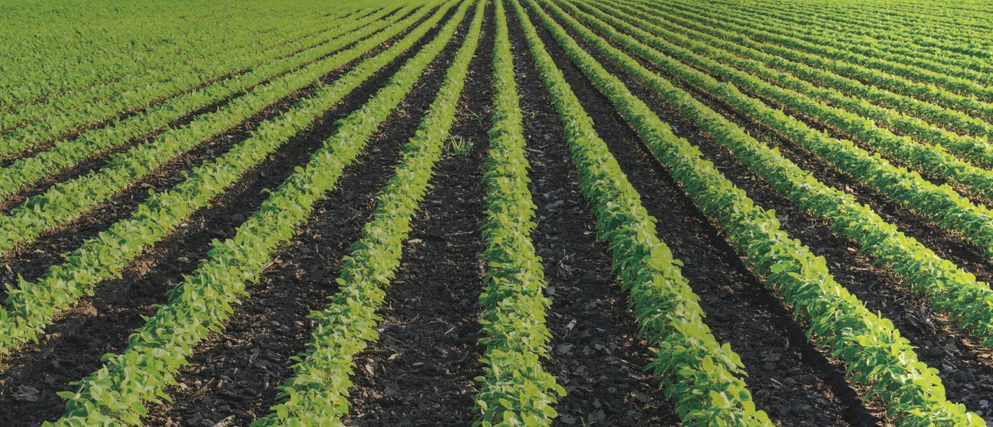 Precision irrigation solutions for field crops & vegetables