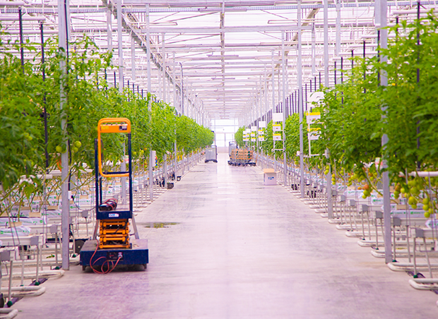 AgTech Leader Netafim to acquire Dutch Greenhouse Company Gakon Horticultural Projects to Meet Growing Demand for Local Food Production in All Climates