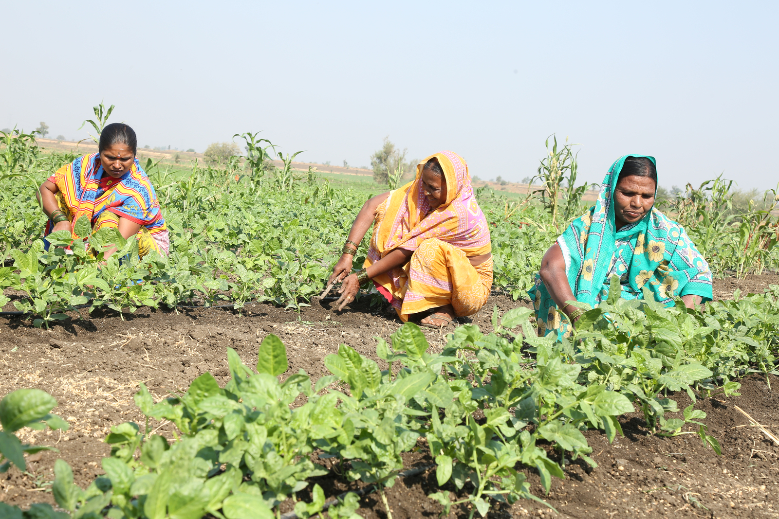 Community Irrigation project - Ramthal India