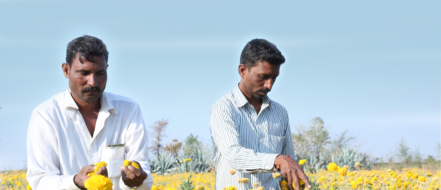 Changing the socio - economic  landscape of rural communities with precision irrigation