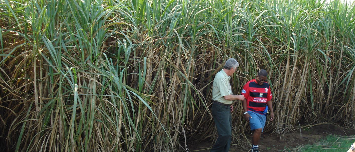 Keeping Swaziland's national sugarcane producer at the cutting edge of modern technology