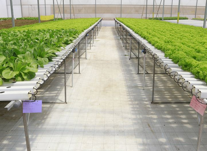 Farming in a Controlled Environment | Netafim Greenhouse
