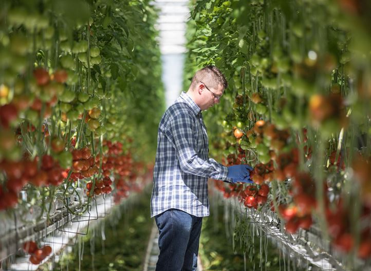 Greenhouse as a sustainable solution