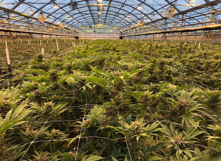 Grow Your Medical Cannabis Project I Netafim