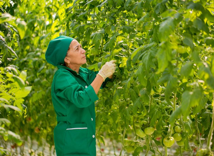 AZERBAIJAN: GROWING TOMATOES, SAVING WATER