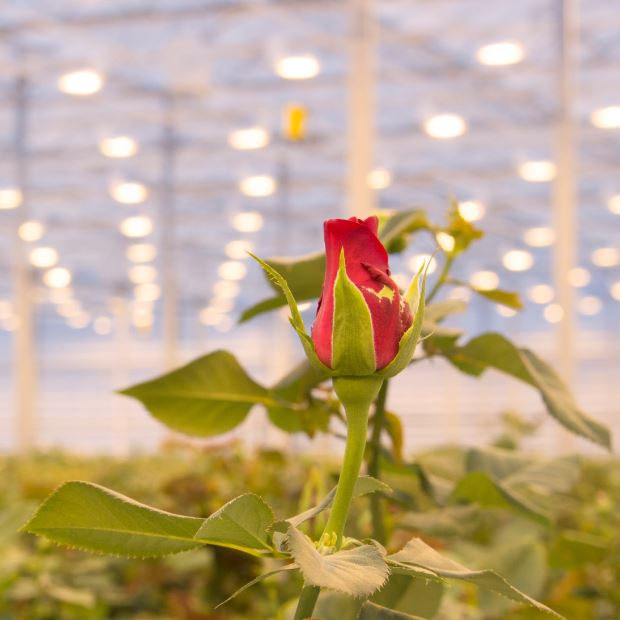 Greenhouse financing