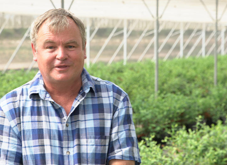 SOUTH AFRICA: SOILLESS BLUEBERRIES PROTECTED FROM THE HEAT