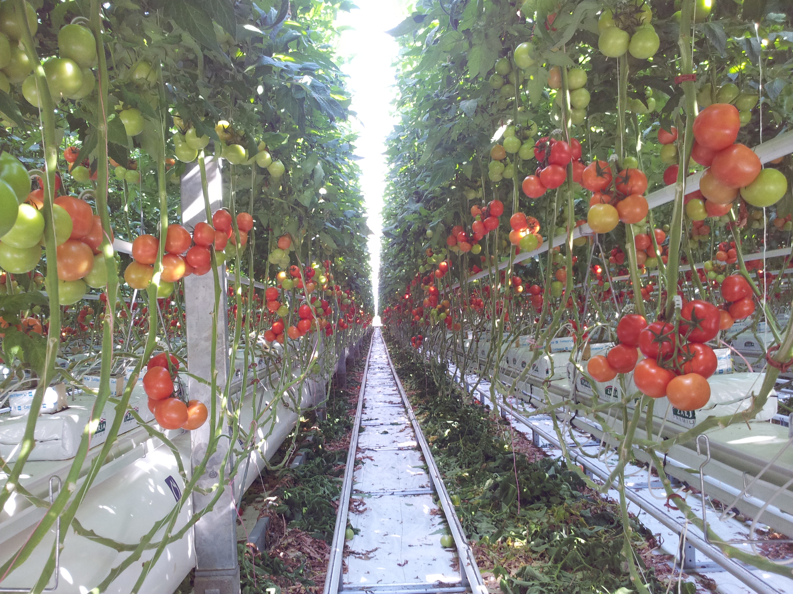 Irrigation Systems, Irrigation
