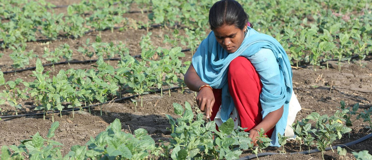 DRIP IRRIGATION CHANGES THE FACE OF AGRICULTURE