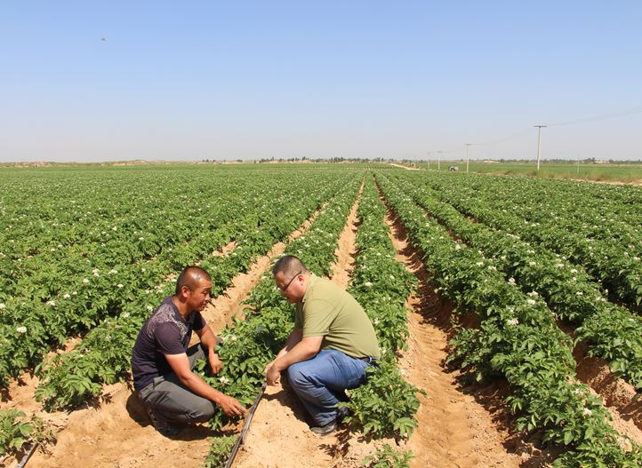 Produce higher potato yields with precision irrigation