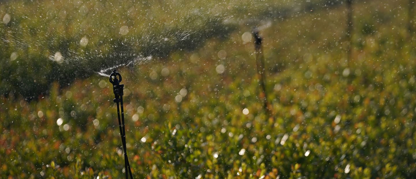 SPRINKLERS IRRIGATION – MUCH MORE THAN JUST IRRIGATION